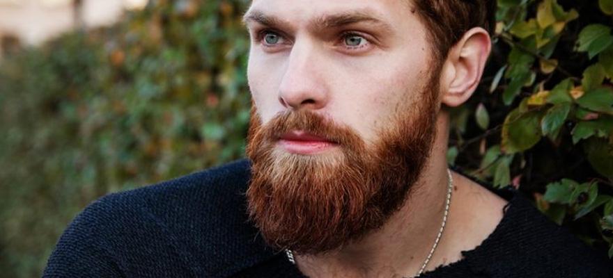 Best Beard Oil Content
