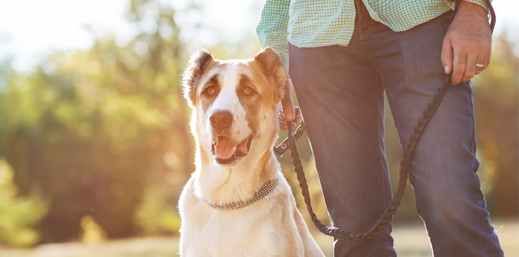 10 Reasons Every Man Should Have a Dog