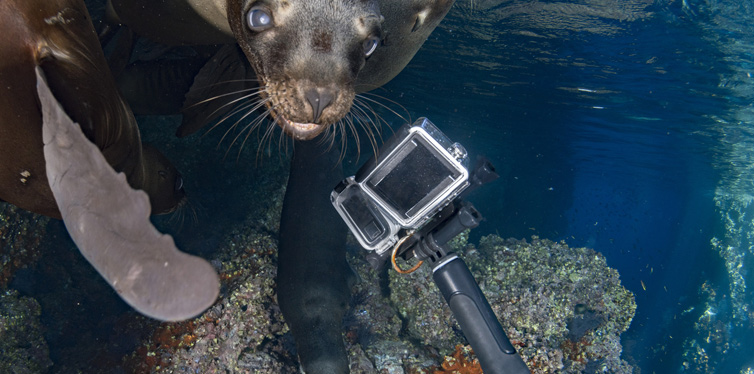 taking photos of animals underwater