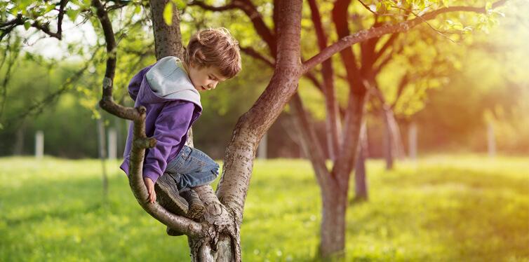 kid climbing a tree