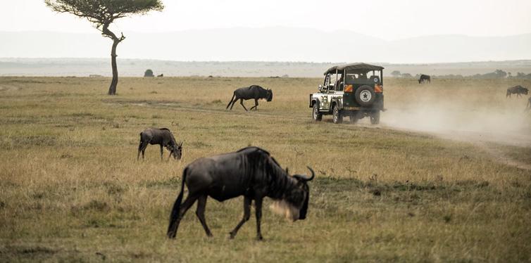 Go On A Safari