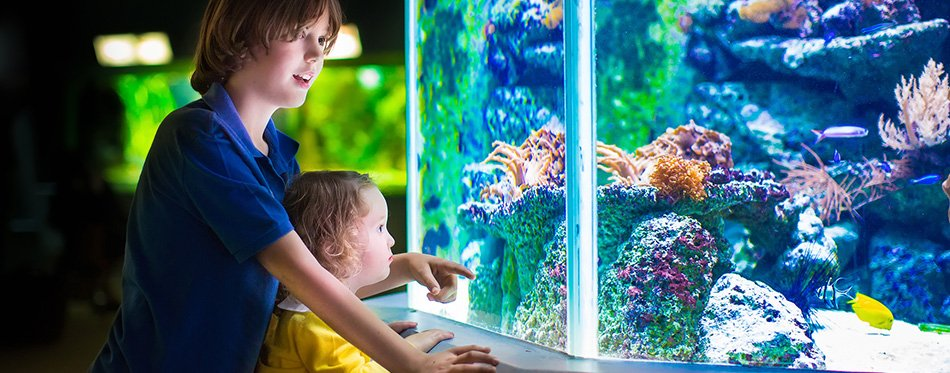 children discovering aquarium