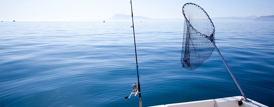 fishing rod and fishing net