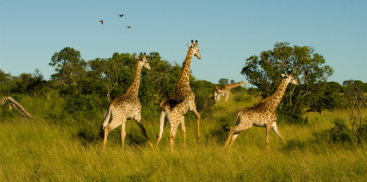 imfolozi wilderness trails in south africa