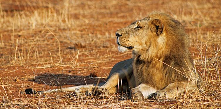 ruaha national park in tanzania