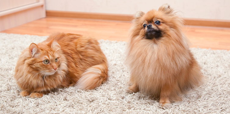 dog and cat on the carpet