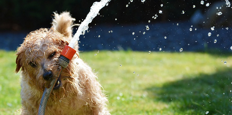 dog with a watering hose