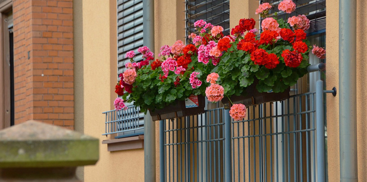 flowers on a small balcony