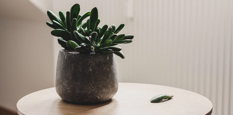 plant on the table