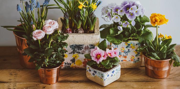 plants on the floor
