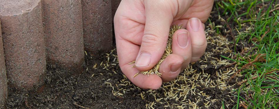 man sowing grass seeds