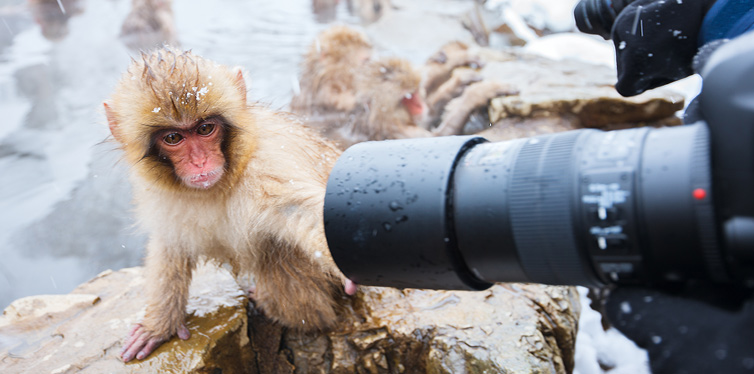 taking photos of animals