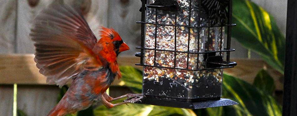bird eating from a bird feeder