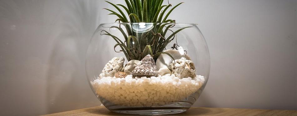 best terrarium