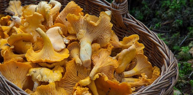 a basket of mushrooms