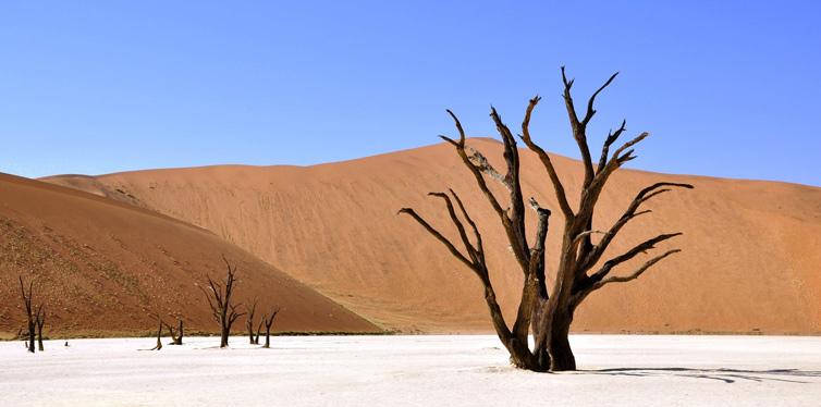 three in a desert