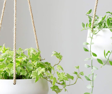 10 best hanging planters review in 2019