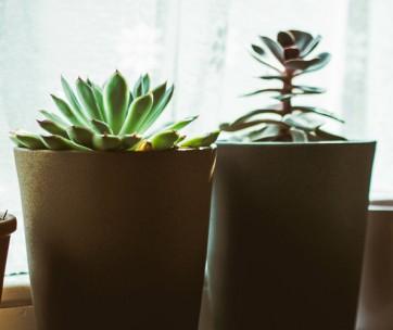 10 easy tips for keeping heatlhy indoor plants
