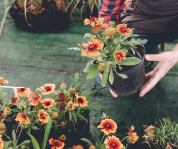 10 simple garden maintenance tips