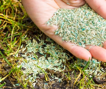 5 best grass seeds review in 2019