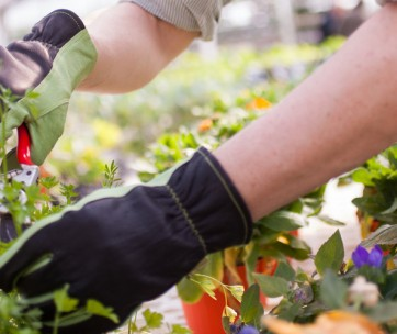 5 reasons to deadhead your plants to bring in new life