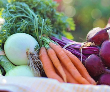 7 items you need to start a bountiful vegetable garden