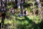 FLIR Black Hornet PRS Drone
