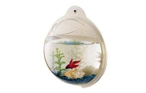 cnz wall mounted fish bowl