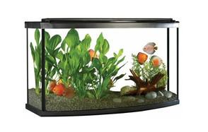 fluval premium aquarium