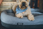yeti trailhead dog bed