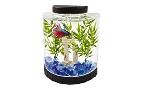 best betta fish tank