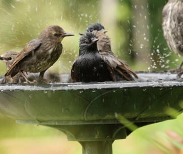 best bird baths