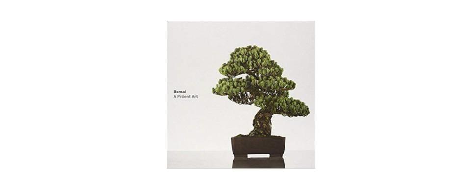 bonsai a patient art