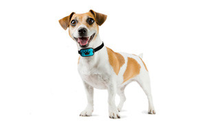 dogrook bark collar
