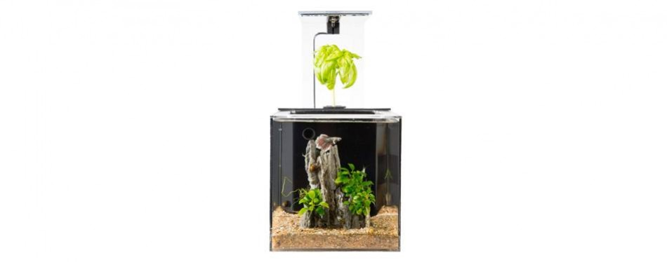 ecoqube c aquarium desktop betta fish tank