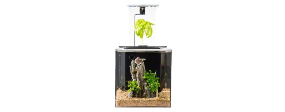 ecoqube c aquarium desktop betta fish tank