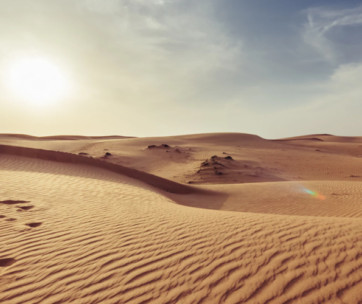 everything you need to know to survive a desert