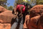 fido pro airlift emergency dog-carrying harness