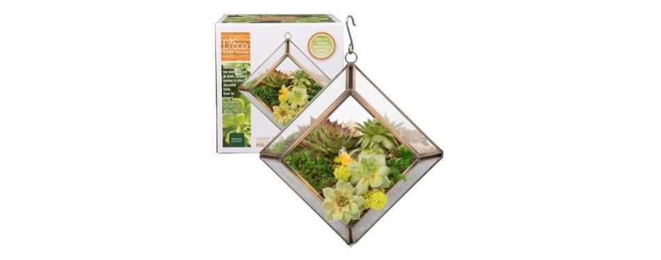 glass terrarium, succulent & air plant