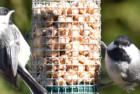 gray bunny gb-6856 premium steel sunflower seed and peanut feeder
