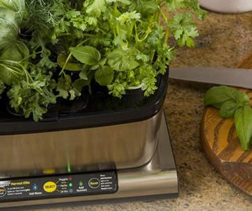 best indoor herb garden kit