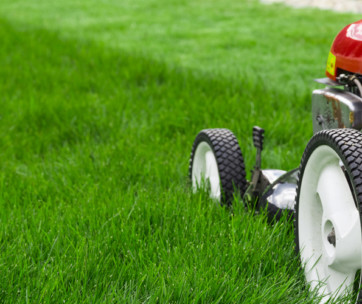 how to achieve the perfect lawn