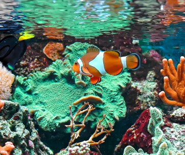 how to set up the best marine fish tank