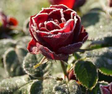 how to winterize your plants