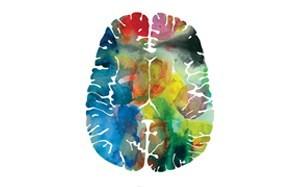 j. sayuri the human brain art prints