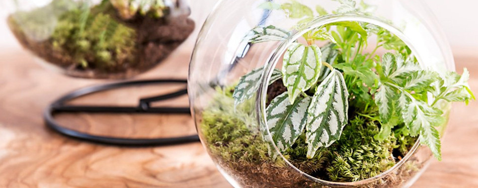 mkono clear glass hanging plant terrarium