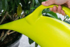 mylifeunit plastic elegant watering can