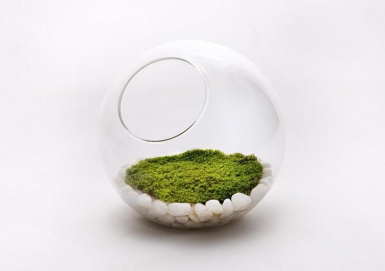 Orbella Aromatic Terrarium