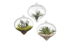 pack of 3 hanging air plant terrarium