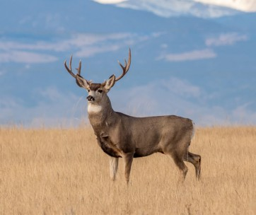 scoring a deer: everything you need to know